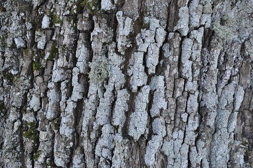 Bark, Tree, Winter, Leann, Texture, Tree Bark