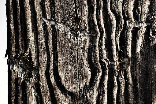 Wood, Structure, Background, Grain, Texture, Old