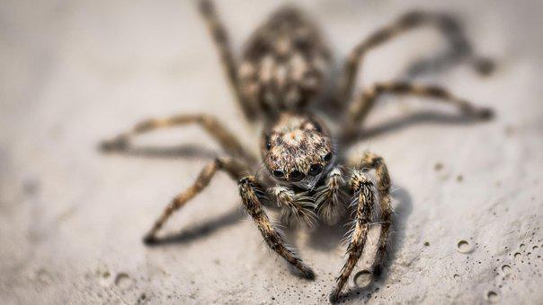 Spider, Insect, Nature, Scary, Arachnophobia, Creepy