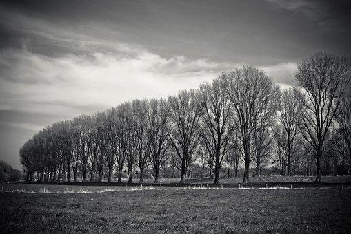 Landscape, Meadowlands, Trees, Bare Branches, Mood, Sky