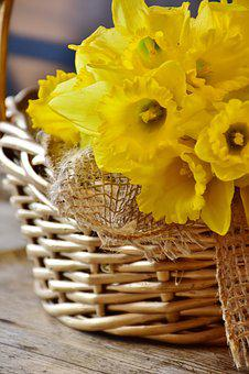 Daffodils, Yellow, Spring, Basket, Blossom, Bloom