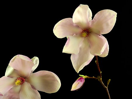 Flower, Blossom, Bloom, Bloom, Spring, Nature, Plant