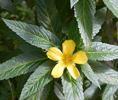 Blossom, Bloom, Yellow, Yellow Flower, Close, Plant