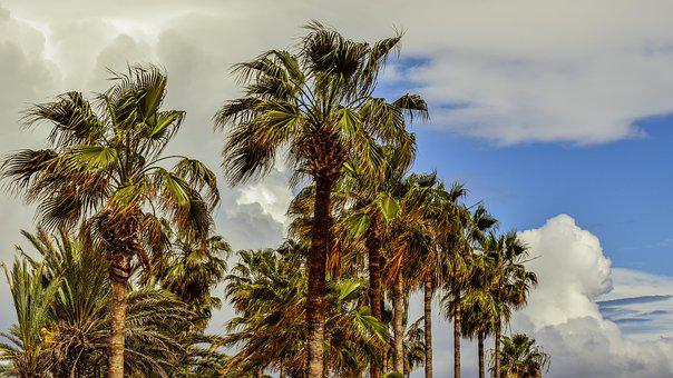 Palm Trees, Sky, Clouds, Tropical, Nature, Exotic