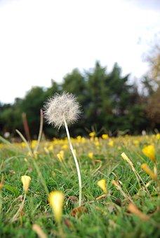 Naturaleza, Dandelion, Nature, Summer, Flower, Plant