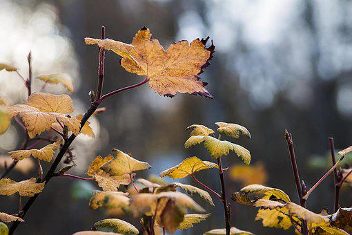 Autumn, Leaves, Golden Autumn, Fall Color, Coloring