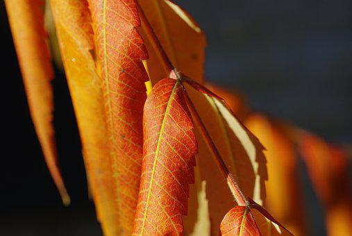Leaves, Foliage, Autumn, Dry Leaves, Yellow
