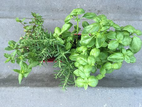 Basil, Mint, Rosemary, Leaf, Ingredient, Natural