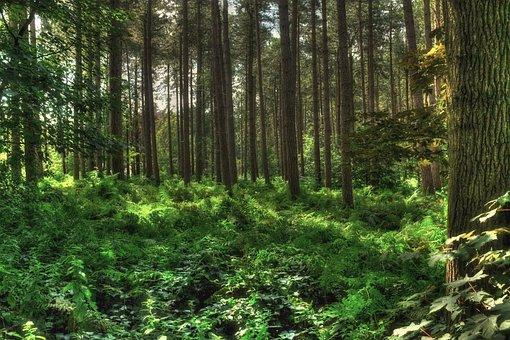 Polygonebos, Polygon Wood, Polygoonbos, First World War