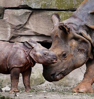 Rhino, Animals, Emotions, Rhino Baby, Love, Mother