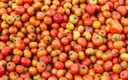 Tomatoes, Vegetable, Tomato, Food, Healthy, Fresh