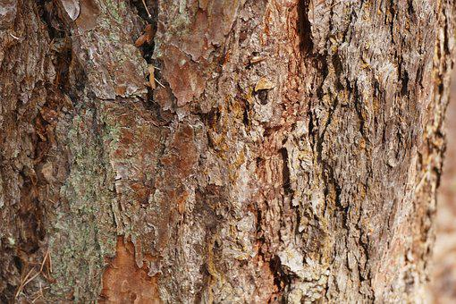 Tree, Bark, Tree Bark, Structure, Wood, Wood Picture