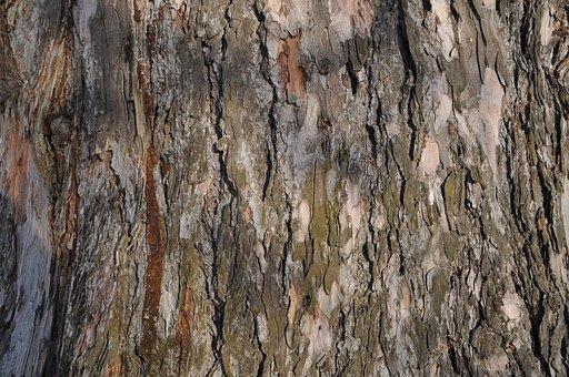 Bark, Tree, Trunk, Tree Bark, Texture, Large Texture