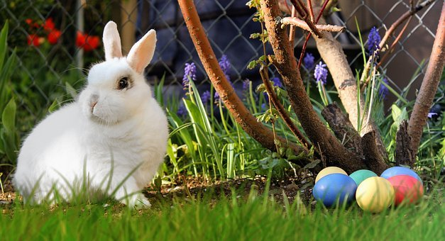 Easter, Hare, White, Easter Eggs, Egg, Colorful, Meadow