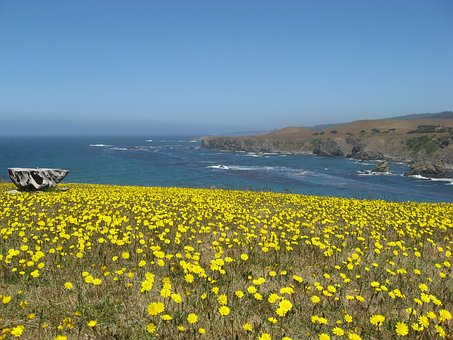 Wildflowers, Pacific Ocean, Coastline, Seascape