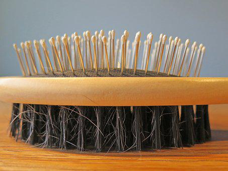 Brush, Hair, Comb, Dog, Care, Wood, Natural Bristles