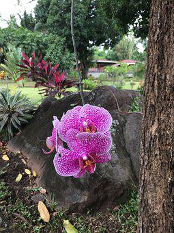 Orchid, Flowers, Blossom, Nature, Garden, Exotic