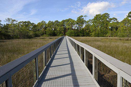 Board Walk, Marsh Land, Swamp, Walkway, Crossing