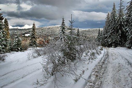 Winter, Way, Forest, Mountains, Turbacz, Landscape