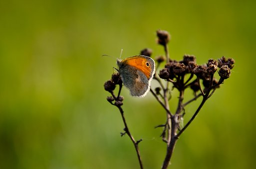 Butterfly, Sun, Nature, Insect, Spring, Close, Macro