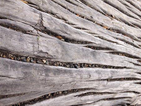 Wood, Nature, Texture, Trunk, Bark