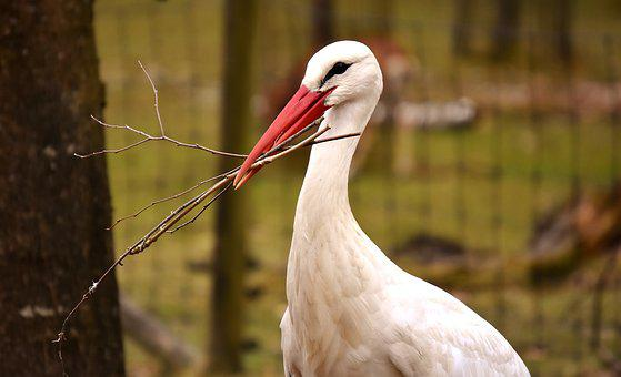 Stork, Nest Building, Bird, Nest, Nature, Fly, Bill