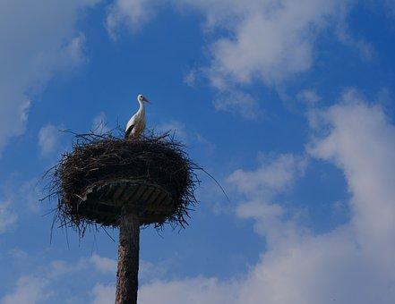 Stork, Nest, Animal, Landscape, Netherlands