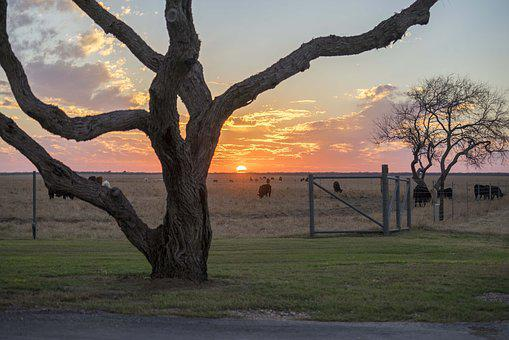 West Texas, Ranch, Sunset