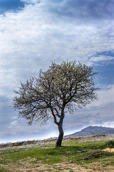 Tree, Nature, Park, Outdoor, Landscape, Natural, Season