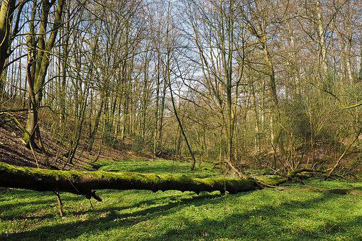 Forest, Landscape, Bach, Glade, Trees, Nature, Water