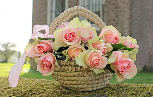 Roses, Noble Roses, Basket, Flowers, Pink, Pink Roses