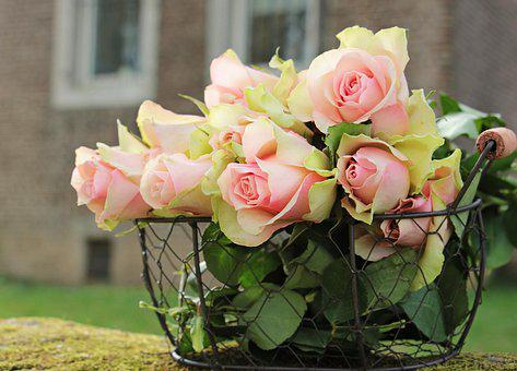Roses, Noble Roses, Basket, Wire Basket, Flowers, Pink
