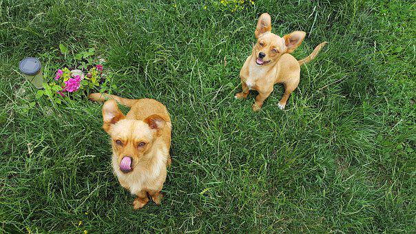 Dogs, Young Dog, Puppies, Puppy, Funny Dogs, Yellow Dog