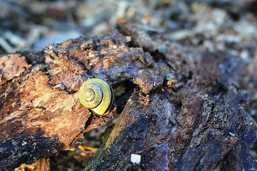 Snail, Seashell, The Bark, Crawl, Nature, Scallop