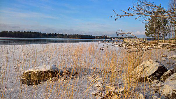 Beach, Reed, Winter, Finnish, A Bed Of Reeds