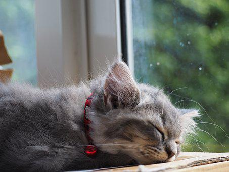 Cat, Asleep, Sleep, Cute, The Sleeping, Relax, Relaxing