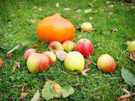 Pumpkin, Apple, Garden