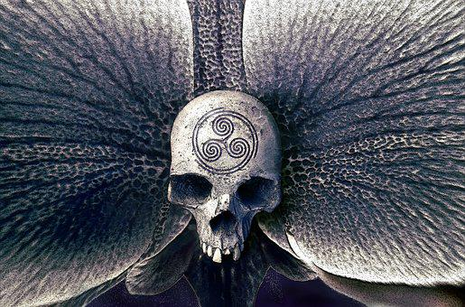 Skull, Orchid, Symbol, Mystical, Fantasy, Mysterious