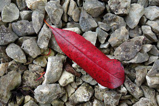 Leaf, Stones, Nature, Red, Grey, Color