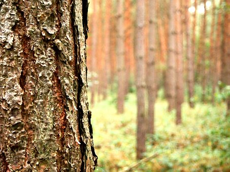 Tree, Forest, Autumn, Nature, Bark