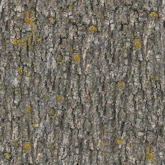 Texture, Seamless, Tileable, Seamless Pattern, Bark