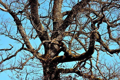 Old Tree, Branches, Aesthetic, Tree, Log, Wood, Gnarled