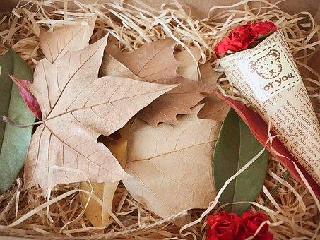 Gift, Defoliation, Indus, Gift Box, Dead Leaves