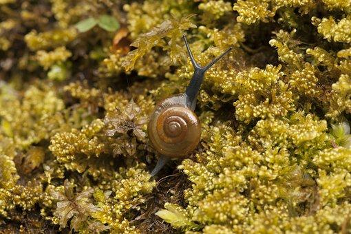 Snail, Moss, Nature