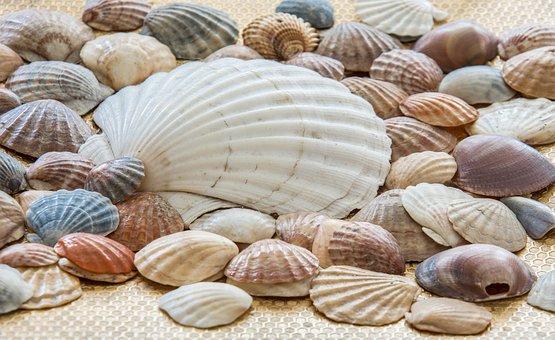 Sea Shells, Shells, Sea, Sea Shell, Ocean, Nature