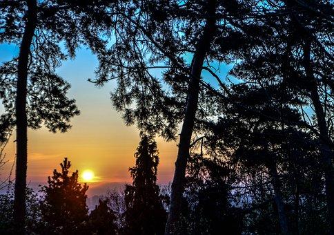 Sunrise, Shadows, Trees, Landscape, Nature, Morning
