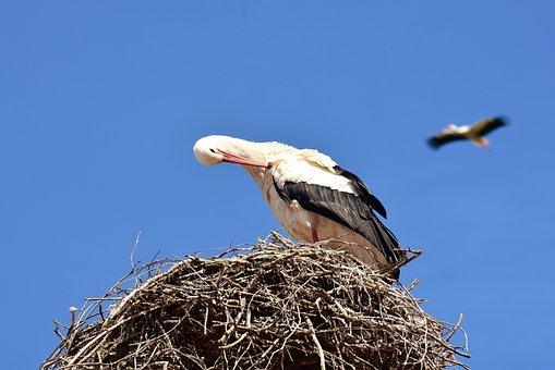 Storks, Pair, Nest Building, Build, Birds, Stork, Fly