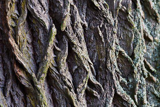 Tree Bark, Bark, Macro, Structure, Wood