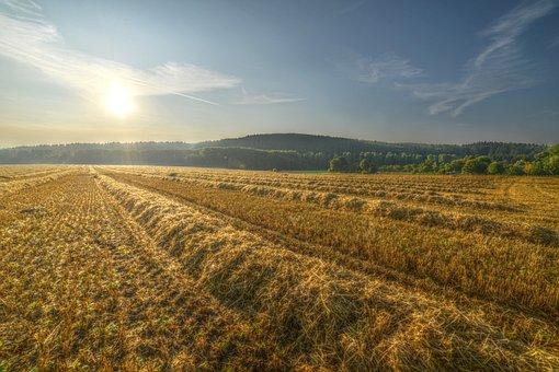 Field, Sun, Landscape, Summer, Autumn, Mood, Sunrise