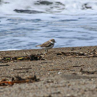Animal, Sea, Beach, Wave, Sand, Little Bird, Brand